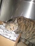12/22/09 Snookie lost her family, her home, and now possible her life. Please Rescue or Adopt