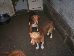 "6/16/10 KY Shelter  ""bursting at seams."" Needs Rescue Help ASAP"