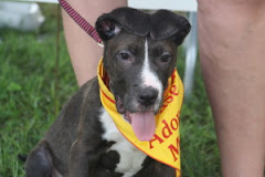7/21/10 First to be euthed. Desperate for Homes KY