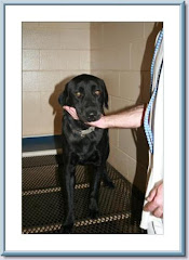8/3/10 Another picture of lab at Floyd Cty Animal Control Rome GA