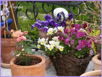 topfgarten im mai mayodans home garden crafts. Black Bedroom Furniture Sets. Home Design Ideas