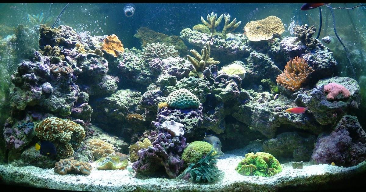 All about aquarium fish salt water aquarium for Aquarium fish online
