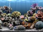 reef ready aquarium