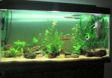 All about aquarium fish how to create a stunning for Community fish tank