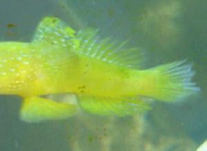 All About Aquarium Fish Aquarium Fish Disease Mouth And Fin Rot