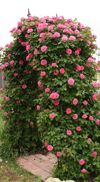 Love Garden Roses: Love My Cottage Garden: Arbor Bliss