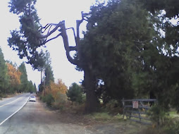 apple hill - november 2006