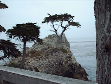 The Lone Tree, Monterey, CA.