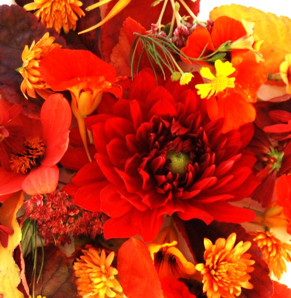 [fall+flowers+011.jpg]