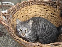 Vår katt Mao