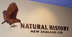 NHNZ logo and model of kea (a native New Zealand alpine parrot) in reception at the NHNZ Offices, Dunedin, New Zealand
