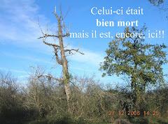 Le petit bois de la Bourdasse