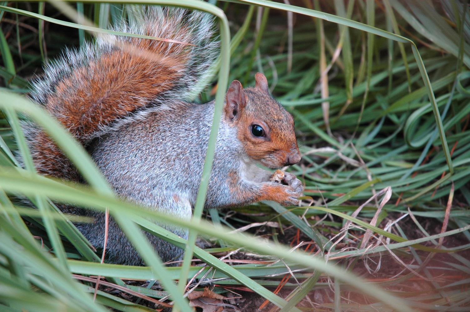 [Squirrel+1s.jpg]
