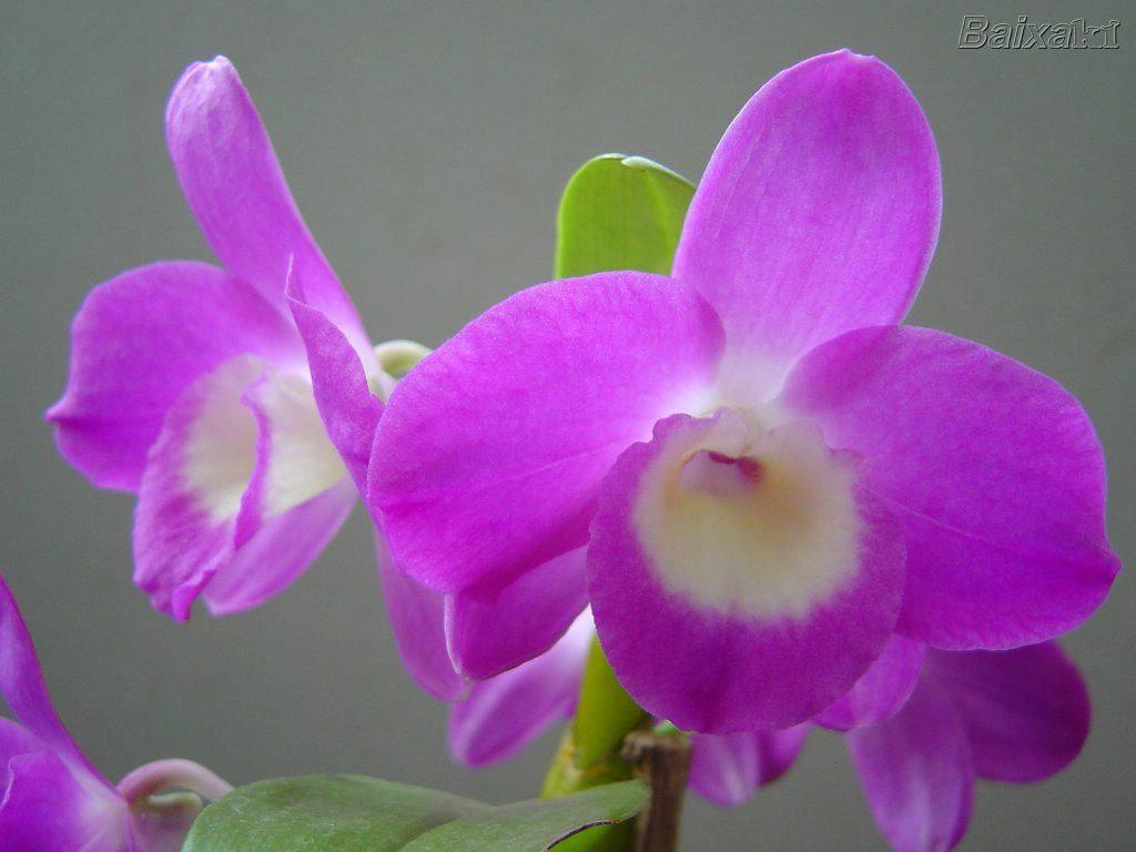 The best images orqu deas as flores mais lindas do mundo for Tipos de viveros pdf