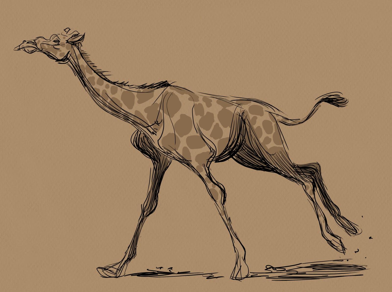 Animal and Life Drawing Blog: Some Giraffe sketches. Cool Giraffe Drawing