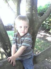 Trenton climbing a tree