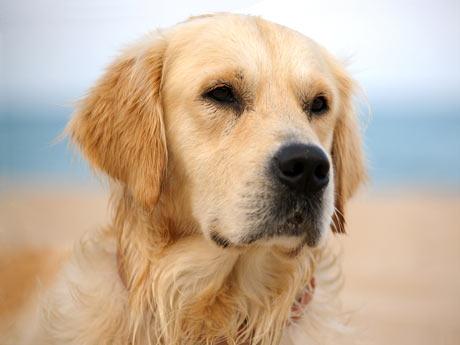 Cuentos Para Niños El Perro Del Establo