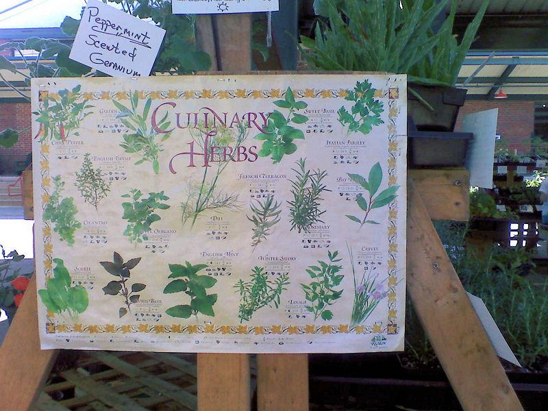 [Capitol+Market+-+Herbs.jpg]