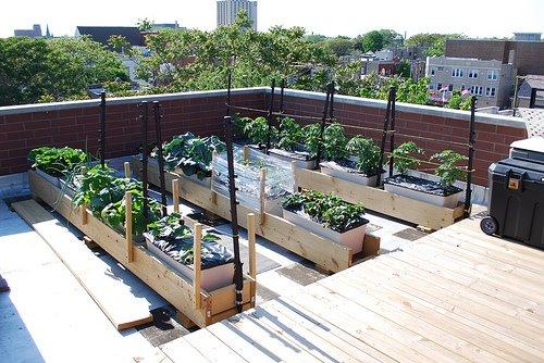 [EB+rooftop+garden.jpg]