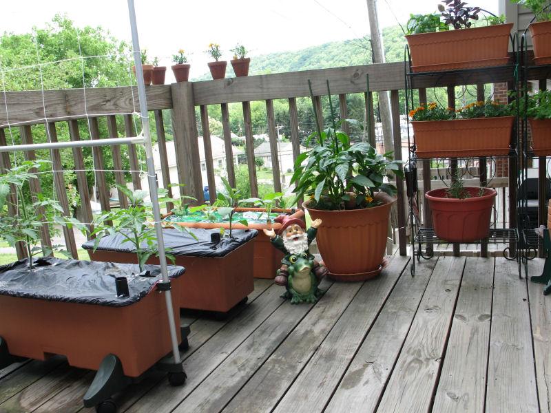 [My+Garden+2008.jpg]