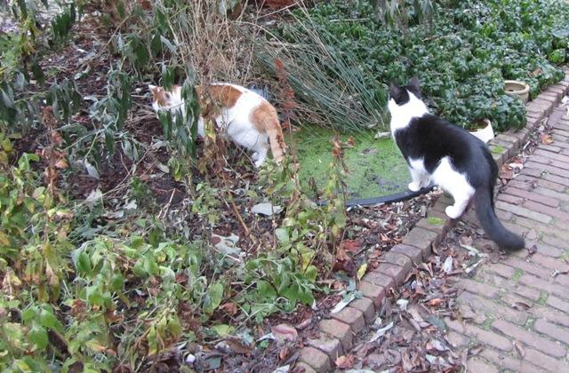 Dutch cats doing reconnaissance