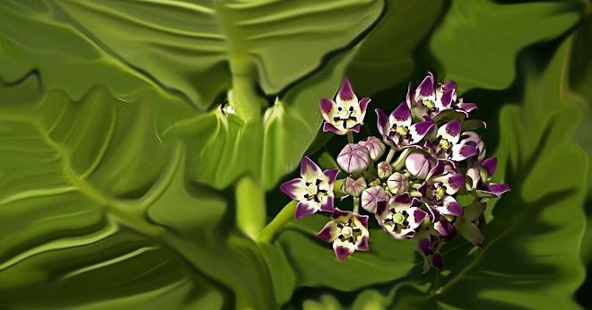 flor de medano