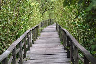 Kota Kinabalu Wetland park Mangrove-walk