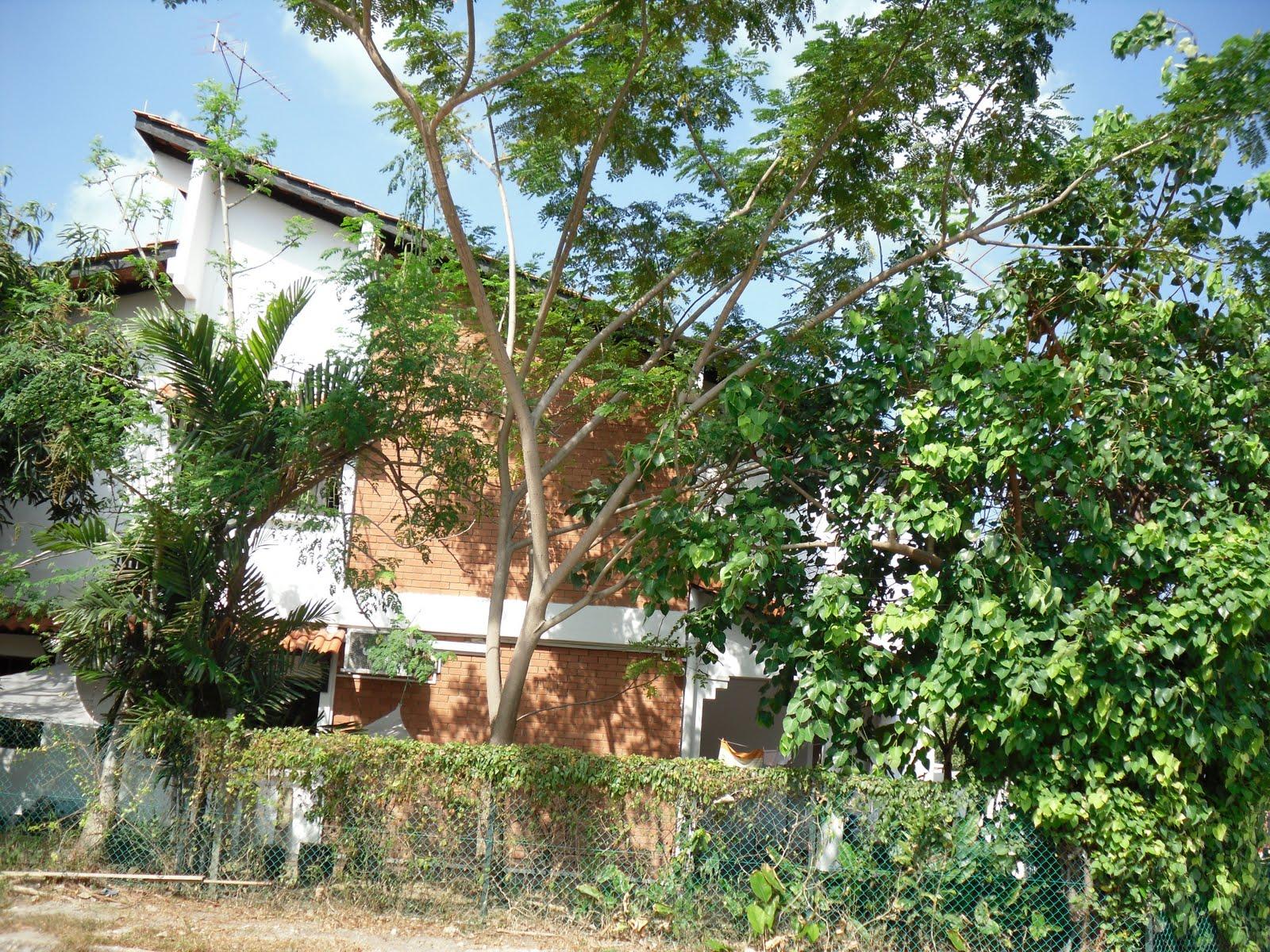 moringa oleifera miracle tree What is moringa the moringa ( ) tree is known as miracle tree to see types of moringa plant please click here all types of moringa have similar benefits.