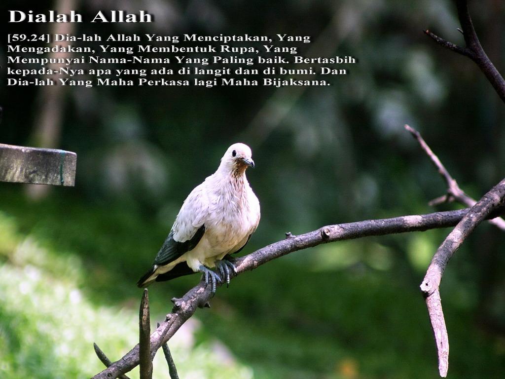 [IMG_0718+Dialah+Allah2+1024x768.jpg]
