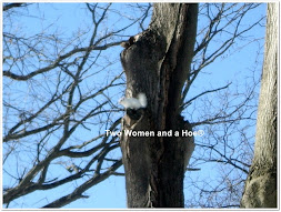 Have some Fun with Edgar the White Squirrel