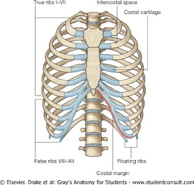 medical journals: sheet no. 24, Cephalic Vein