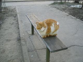 городской кот, рыжий, возле подъезда на Шуменском