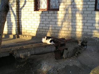 городской кот на трубах на Шуменском