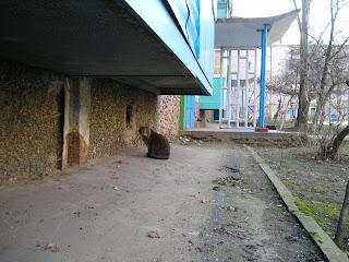 Кот под балконом, 10 марта 2007