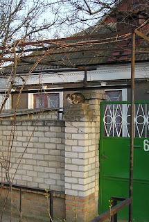 кот на заборе, ул Жуковского