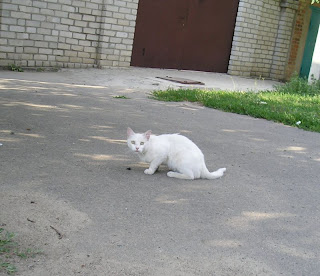 Белый кот, ул Бегмы