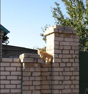 Рыжий кот на заборе, ул Жуковского