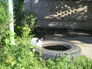 Белый кот перед двором
