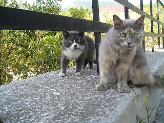 два кота, Алушта, май 2007