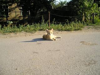 ул Жуковского, рыжий кот (20.07.07)