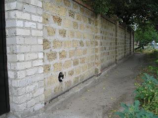 Кот на ул Жуковского, 28 июля 2007