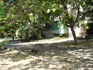 кот, ул Рабочая, 30 июля 2007