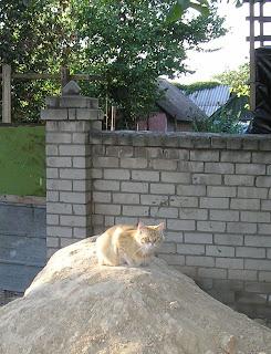 Кот, на куче песка (понед., 06.08.07, ул Жуковского)