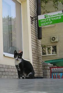 кот, б-р Мирный
