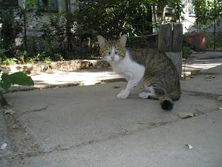 кот, ул Рабочая, 19.08.07