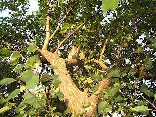 кот на дереве, ул Жуковского
