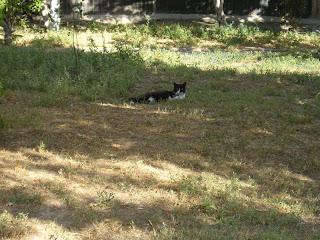 Таврический, кот на траве, 18.08.2007