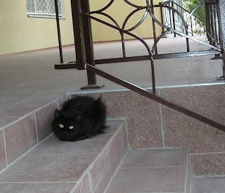 черный кот на ступеньках института усовершенствования учителей, 02.09.07