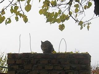 кот на заборе, 1 ноября 2007