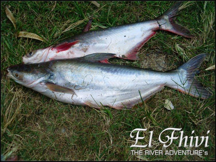 Gambar Catatan Penjelajah Sungai Mancing Waduk